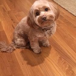 groomer on the spot edmonton reviews